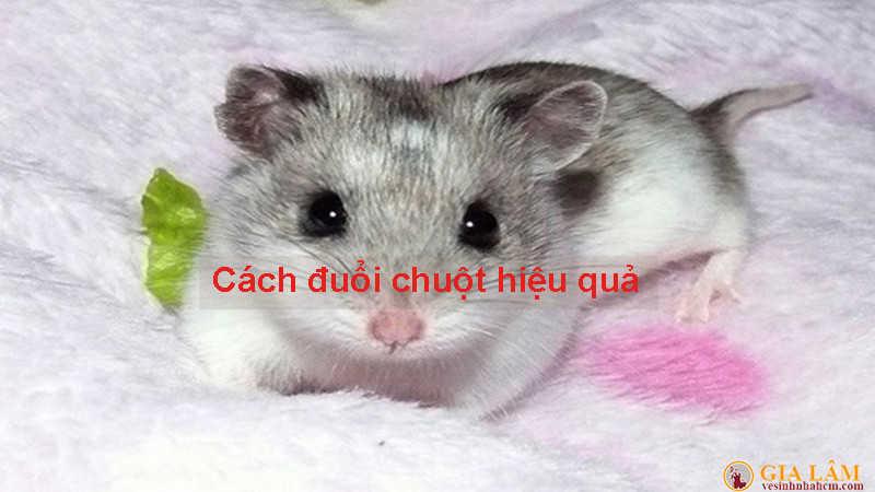 cách đuổi chuột hiệu quả