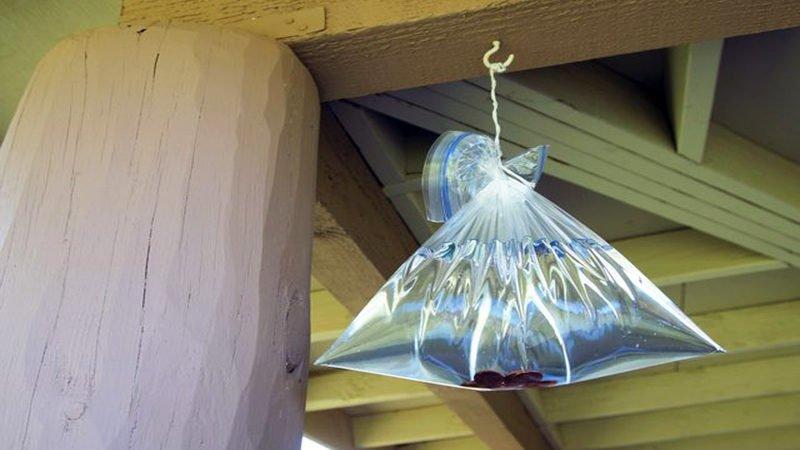cách đuổi ruồi bằng túi nước