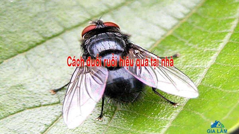 cách đuổi ruồi hiệu quả tại nhà