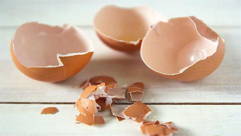 đuổi thằn lằn bằng vỏ trứng